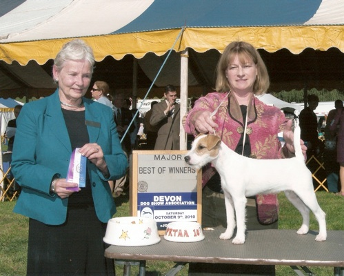 Dog Shows At Purina Farms This Weekend