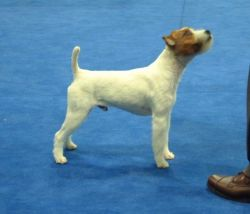 The blue carpeting at Eukanuba 2005 Group Ring