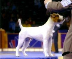 Best of Breed Eukanuba 2005