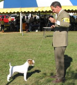 Romeo with handler Michael Scott Hatsboro 2005