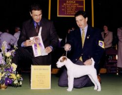 Westminster Best of Breed 2001