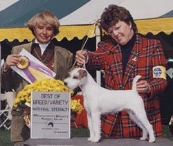 2000 PRTAA Best of Breed at 11. 5 months of age.
